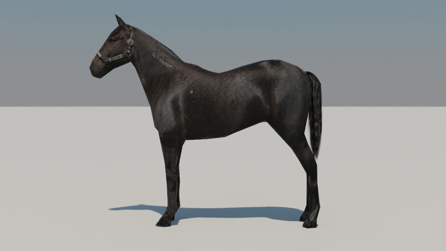 Horse royalty-free 3d model - Preview no. 2