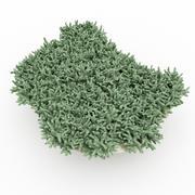 Coral Acropora 3d model
