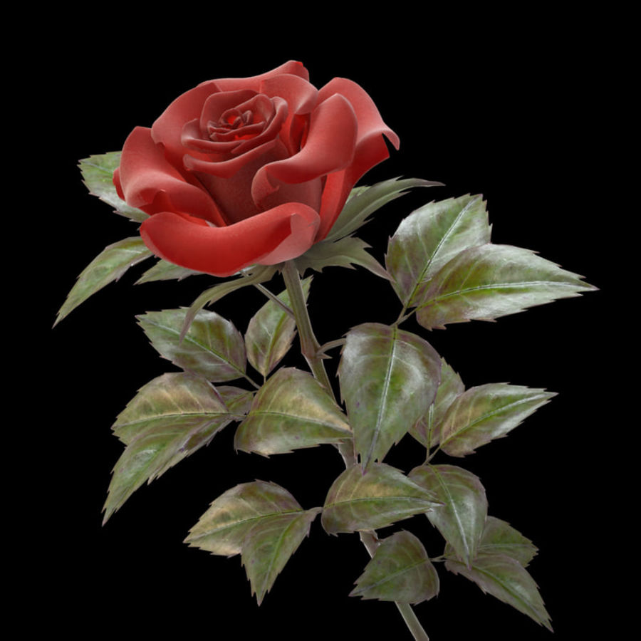 rose red royalty-free 3d model - Preview no. 2
