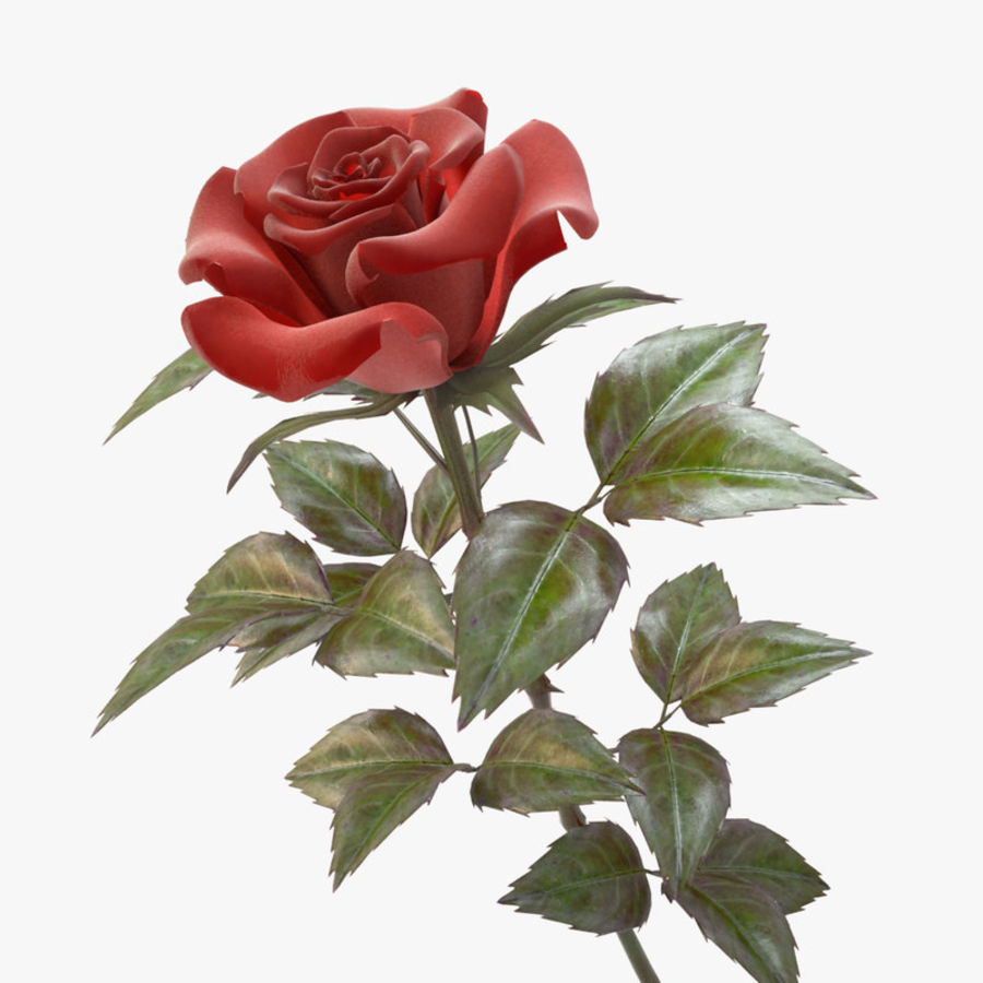 rose red royalty-free 3d model - Preview no. 6