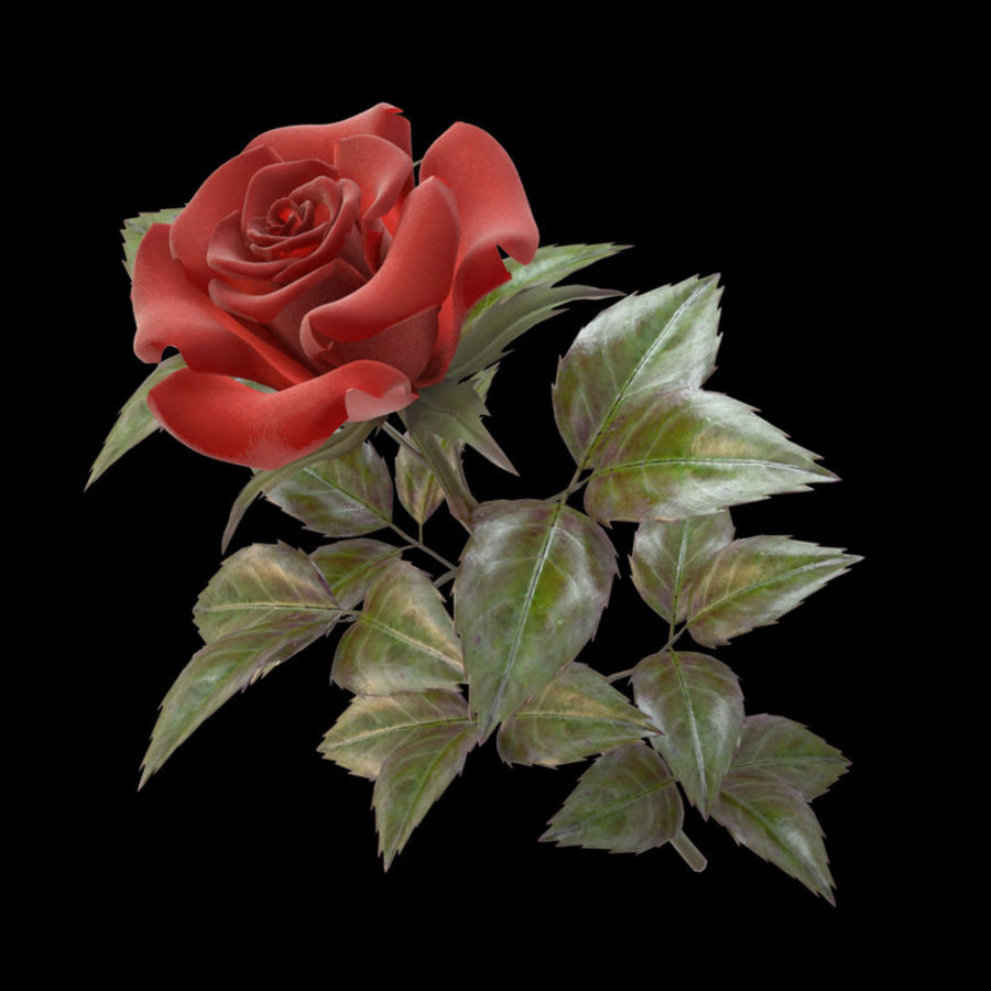 rose red royalty-free 3d model - Preview no. 4