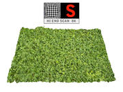 Grass Clover 8K 3d model