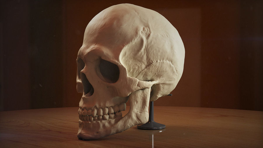 Skull new royalty-free 3d model - Preview no. 8