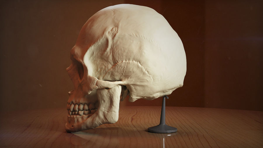 Skull new royalty-free 3d model - Preview no. 1