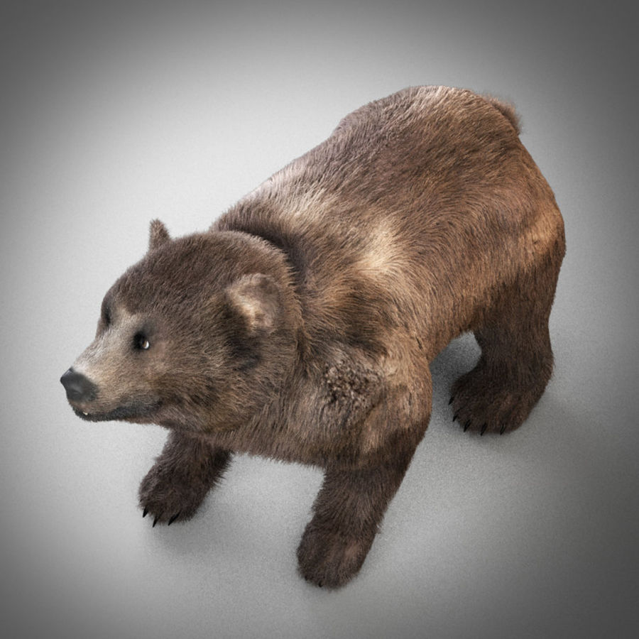 Grizzly Bear royalty-free 3d model - Preview no. 5