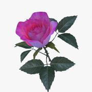 rose pink_v2 3d model