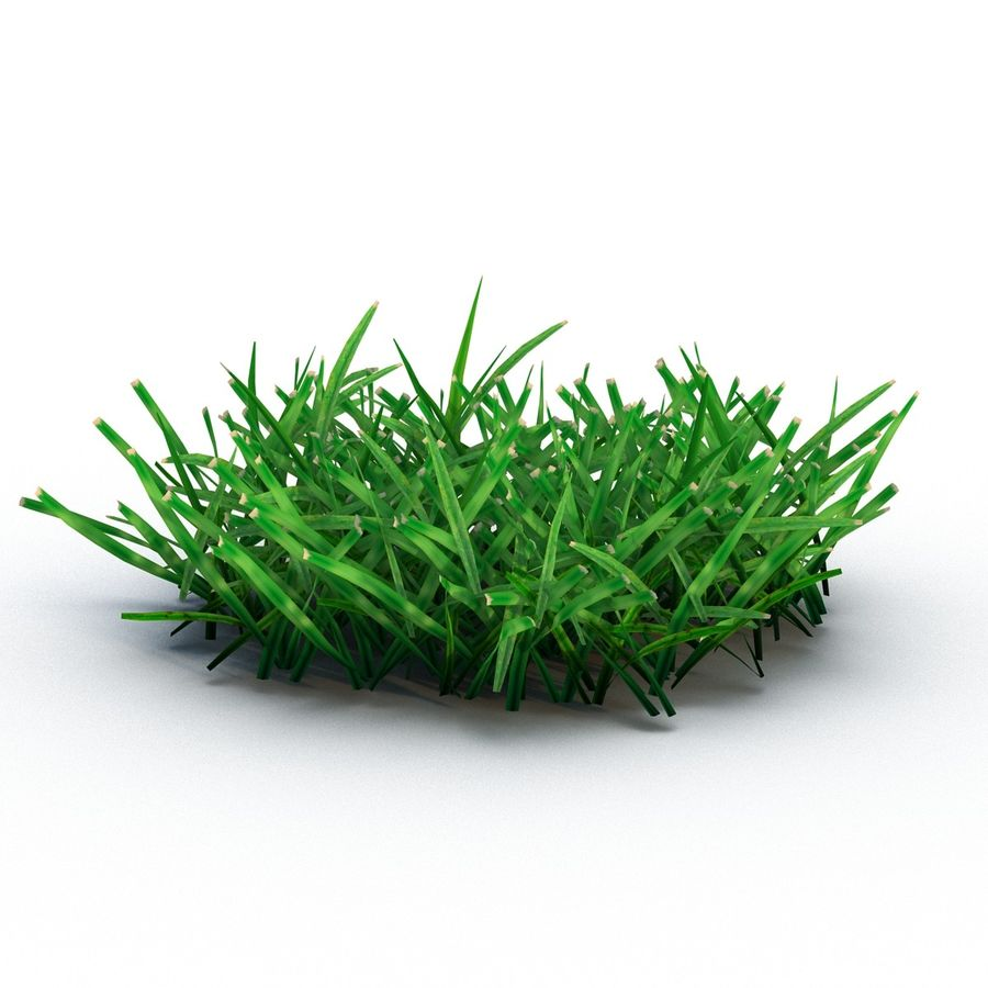 Grass 4 royalty-free 3d model - Preview no. 4