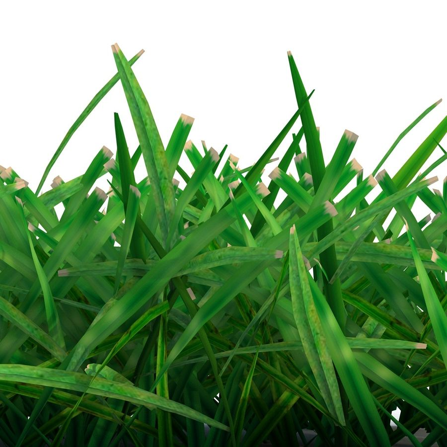 Grass 4 royalty-free 3d model - Preview no. 9