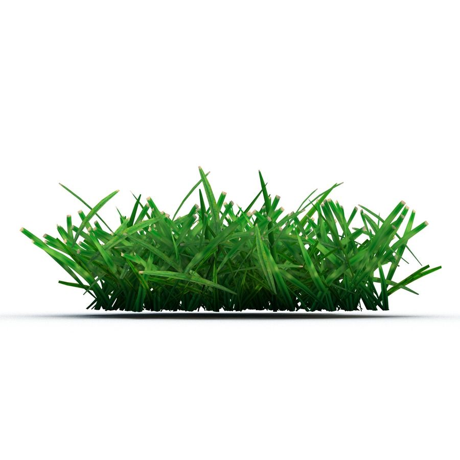 Grass 4 royalty-free 3d model - Preview no. 6