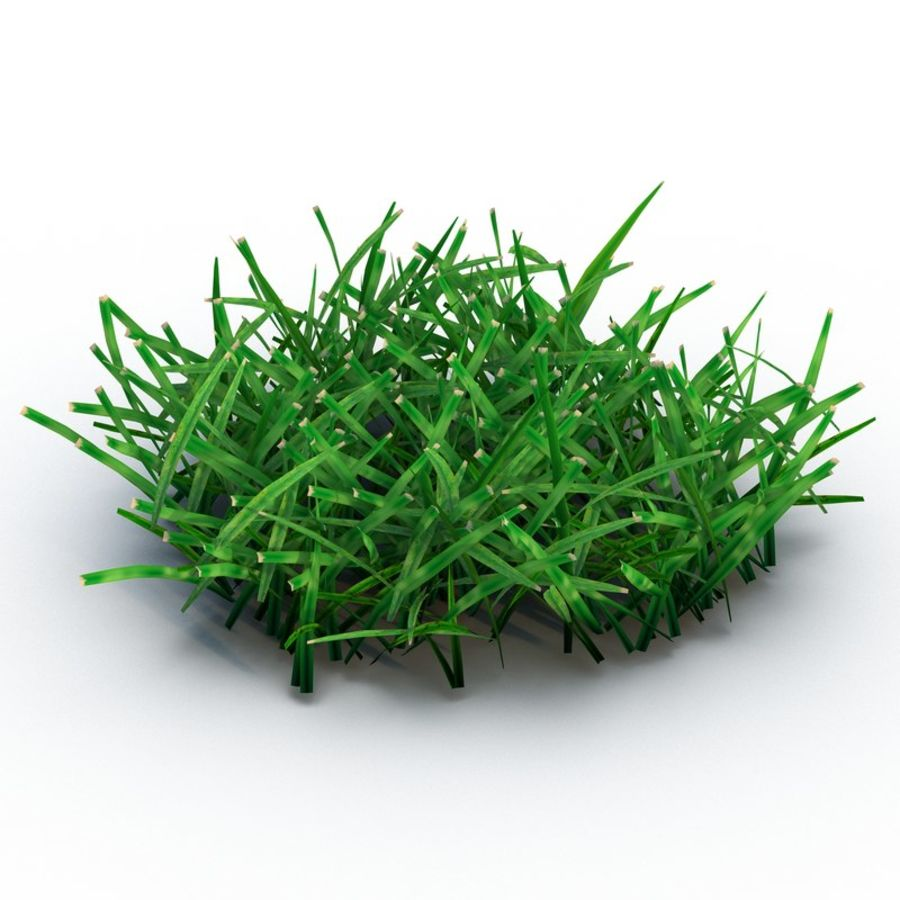 Grass 4 royalty-free 3d model - Preview no. 2