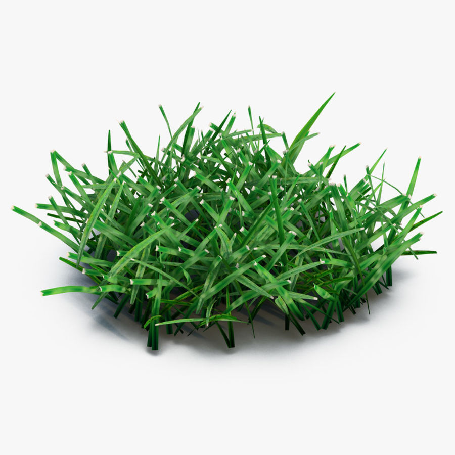 Grass 4 royalty-free 3d model - Preview no. 1