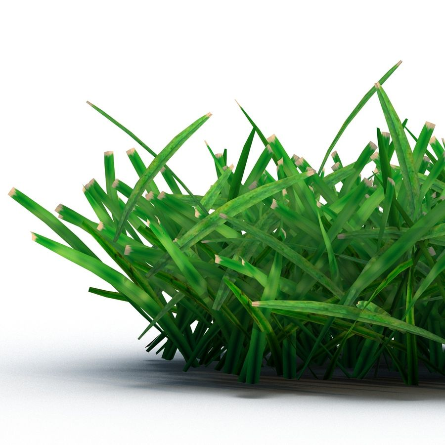 Grass 4 royalty-free 3d model - Preview no. 7