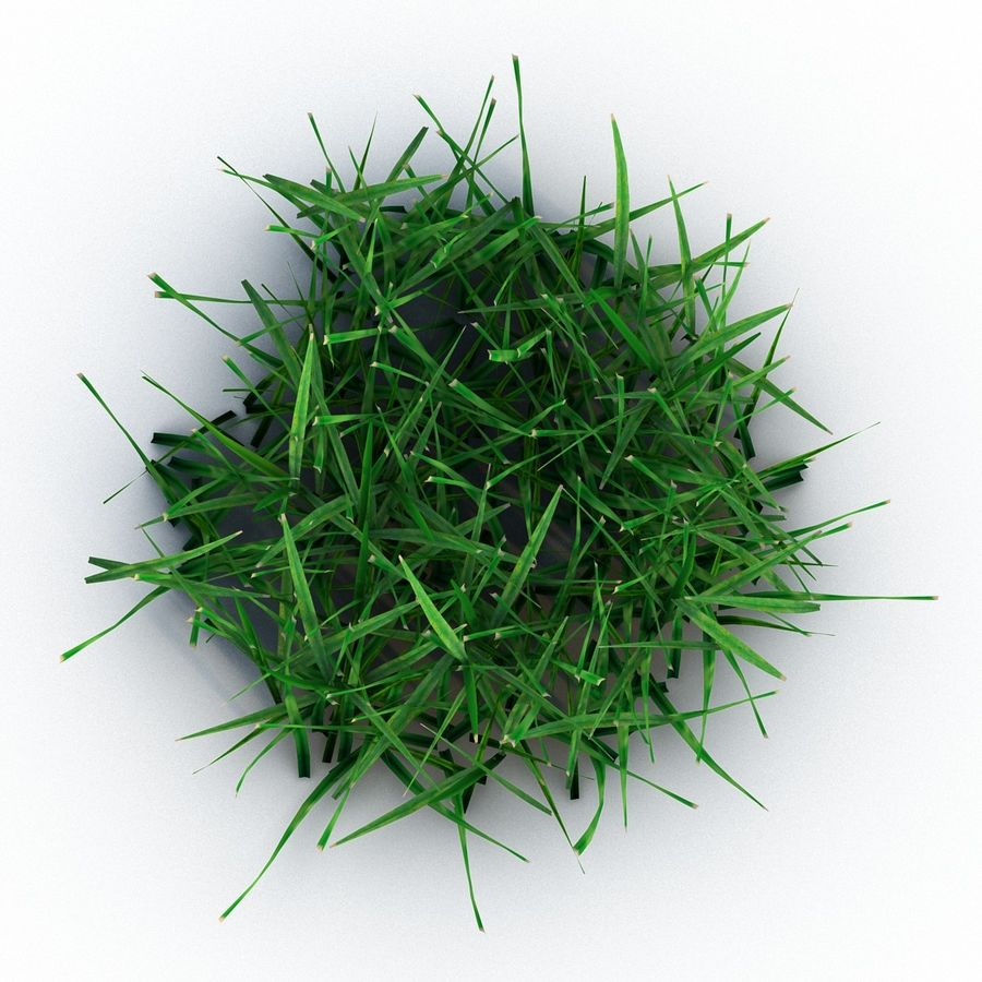 Grass 4 royalty-free 3d model - Preview no. 5