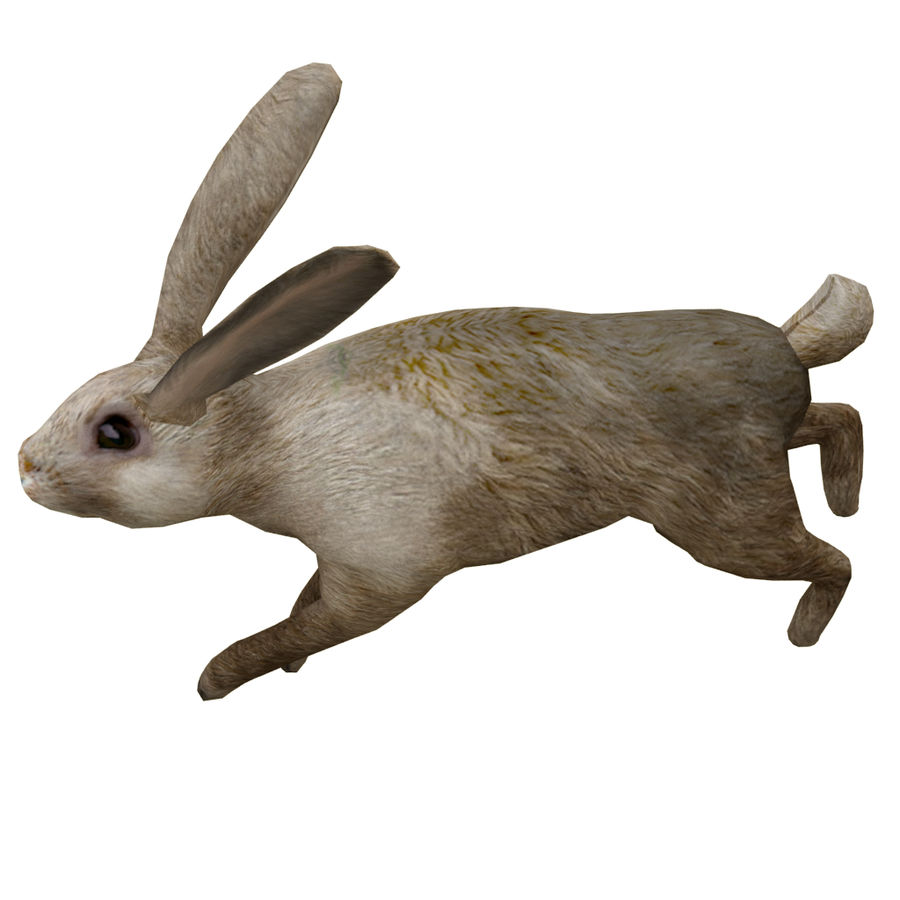 Hare_animated royalty-free 3d model - Preview no. 4