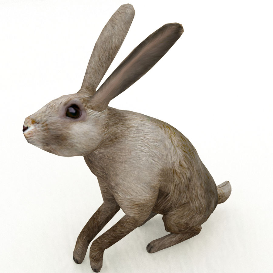 Hare_animated royalty-free 3d model - Preview no. 10