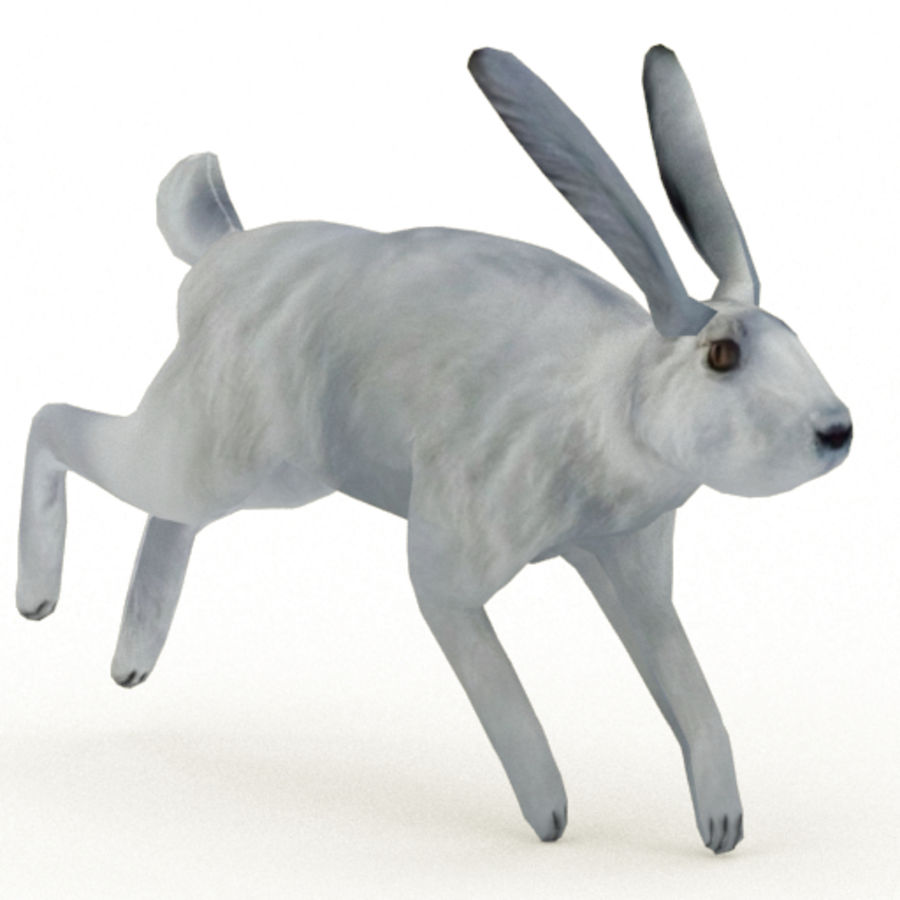 Hare_animated royalty-free 3d model - Preview no. 12