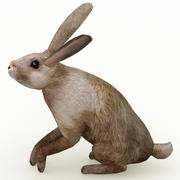 Hare_animated 3d model