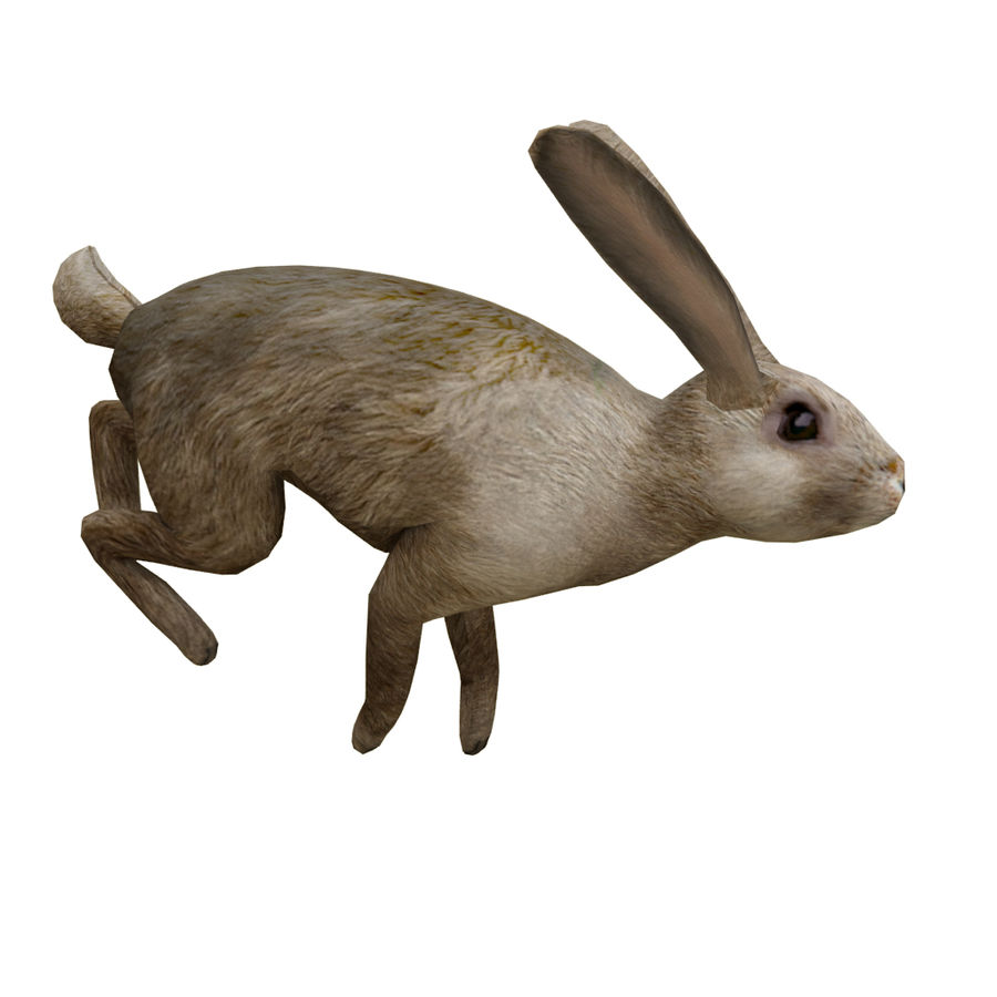 Hare_animated royalty-free 3d model - Preview no. 3
