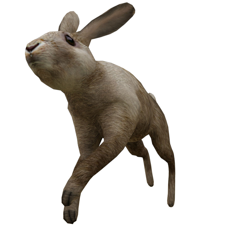 Hare_animated royalty-free 3d model - Preview no. 5