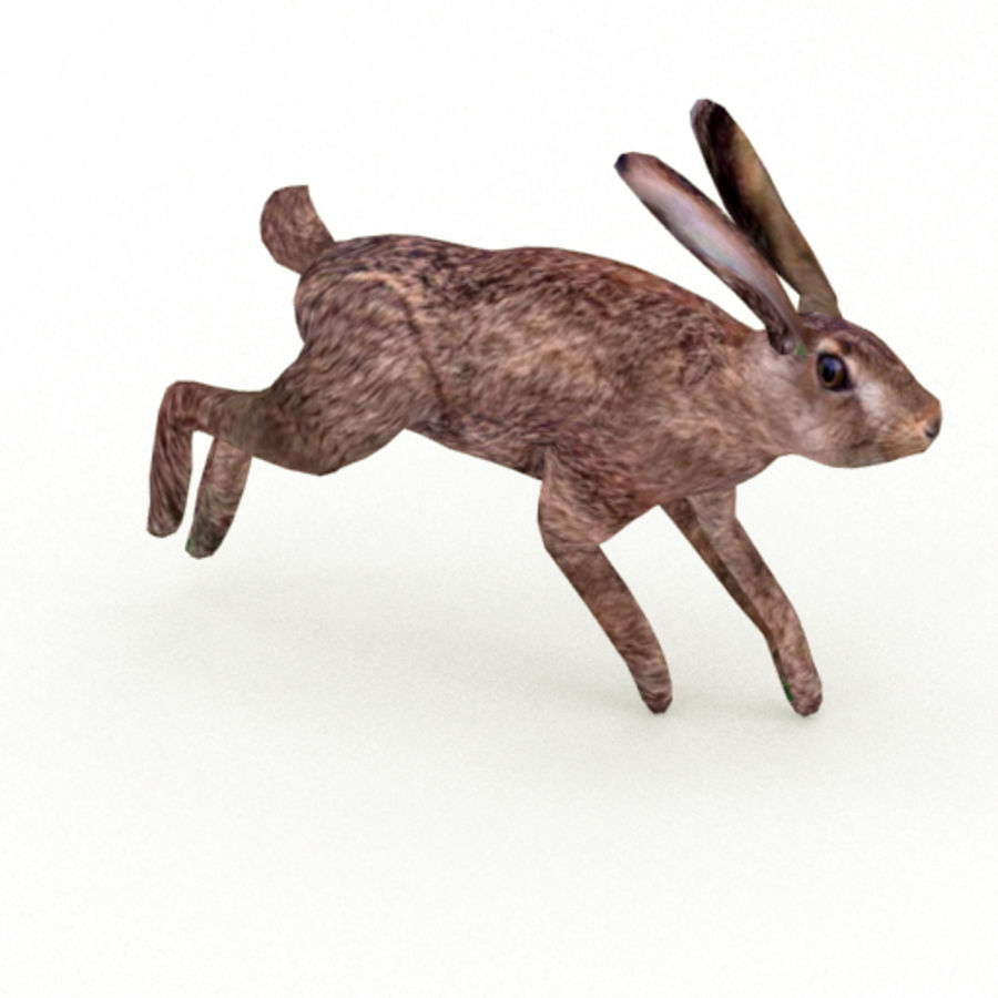 Hare_animated royalty-free 3d model - Preview no. 13