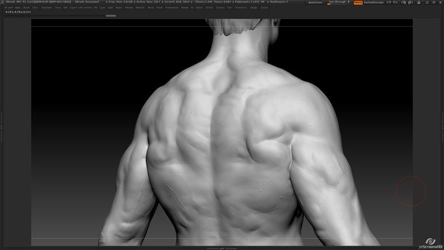 Anatomi avancerad royalty-free 3d model - Preview no. 16