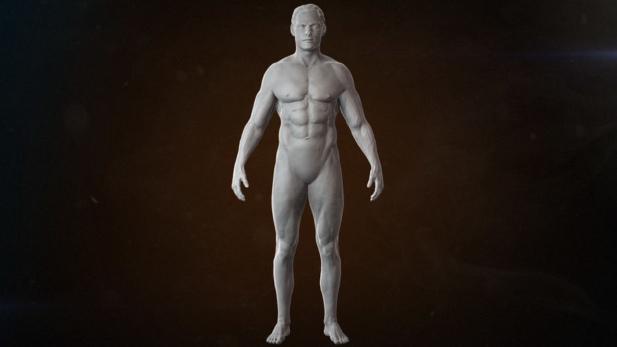Anatomy advanced royalty-free 3d model - Preview no. 6