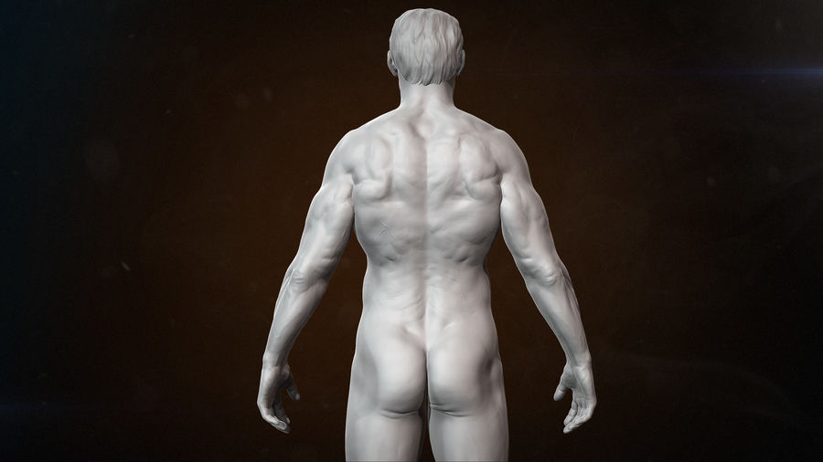 Anatomy advanced royalty-free 3d model - Preview no. 5