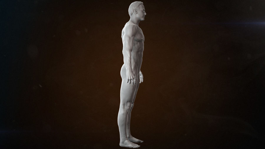 Anatomy advanced royalty-free 3d model - Preview no. 8