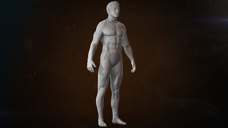 Anatomy advanced royalty-free 3d model - Preview no. 7