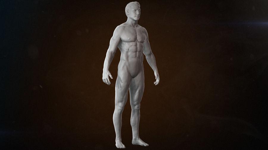 Anatomi avancerad royalty-free 3d model - Preview no. 7