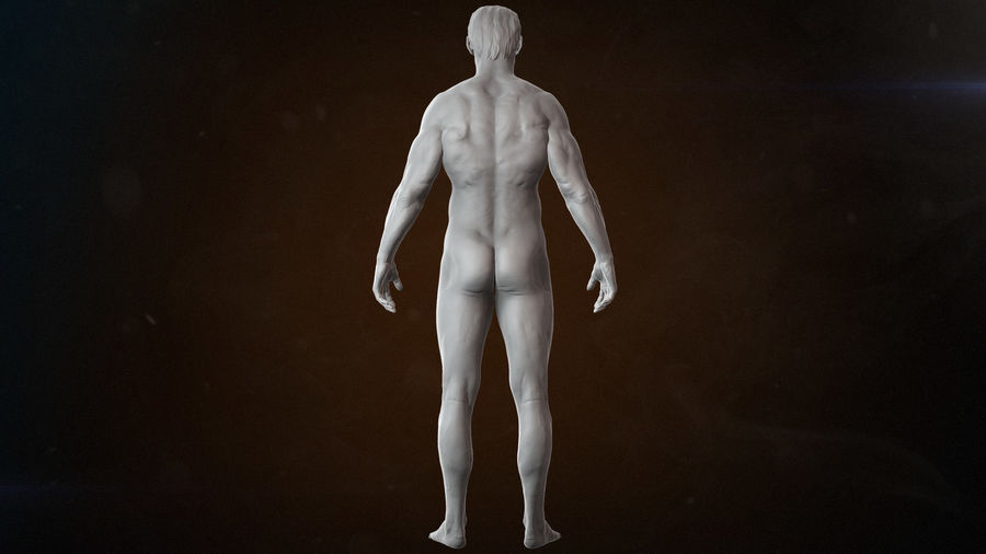 Anatomy advanced royalty-free 3d model - Preview no. 10