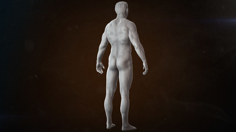 Anatomy advanced royalty-free 3d model - Preview no. 9