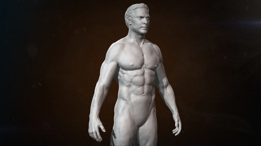 Anatomy advanced royalty-free 3d model - Preview no. 2