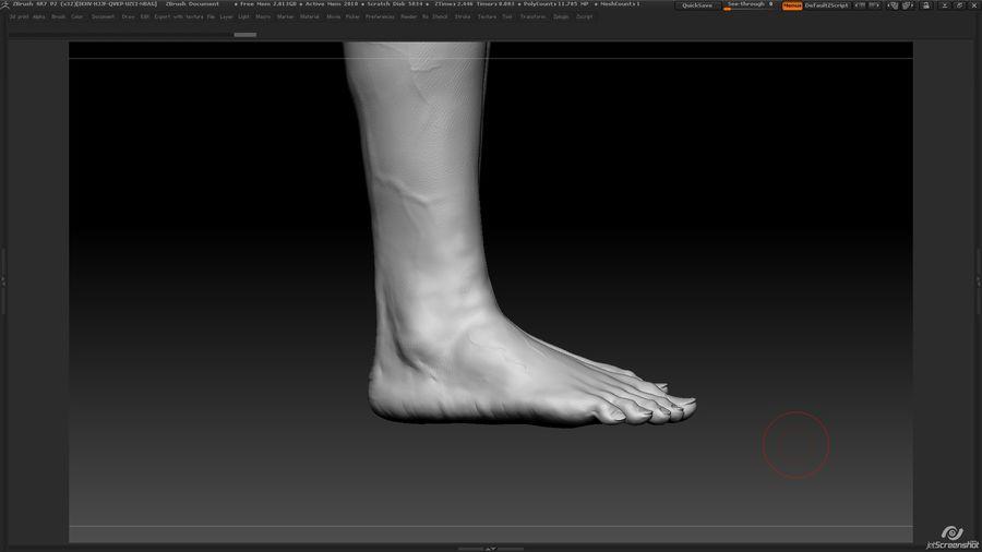 Anatomi avancerad royalty-free 3d model - Preview no. 27