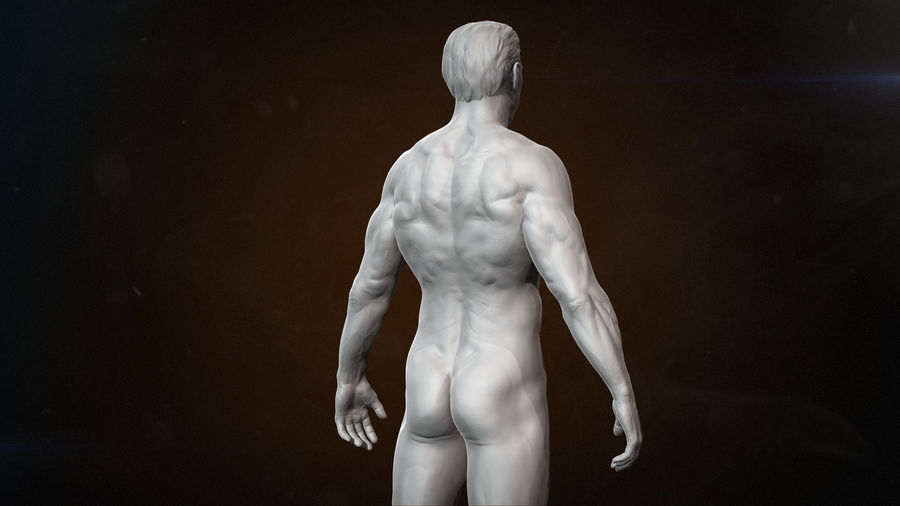 Anatomy advanced royalty-free 3d model - Preview no. 4