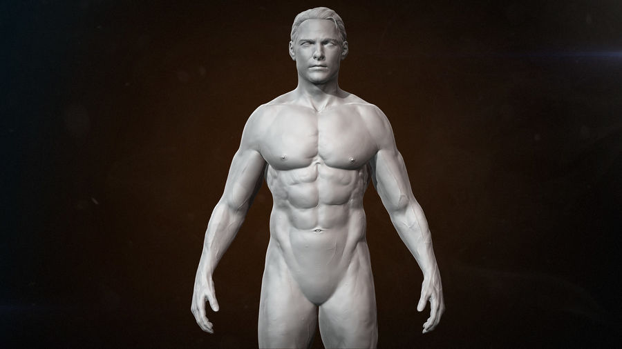 Anatomy advanced royalty-free 3d model - Preview no. 1