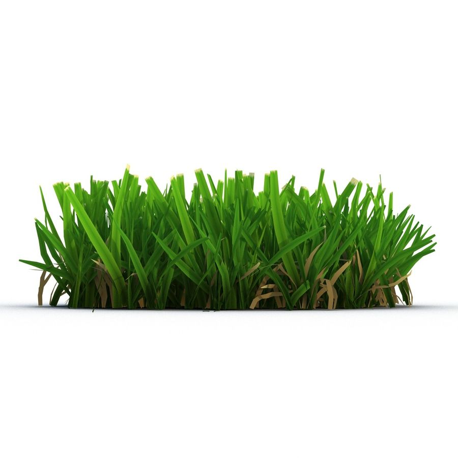 Grass 5 royalty-free 3d model - Preview no. 5