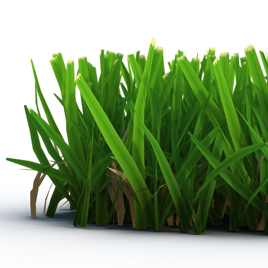 Grass 5 royalty-free 3d model - Preview no. 6
