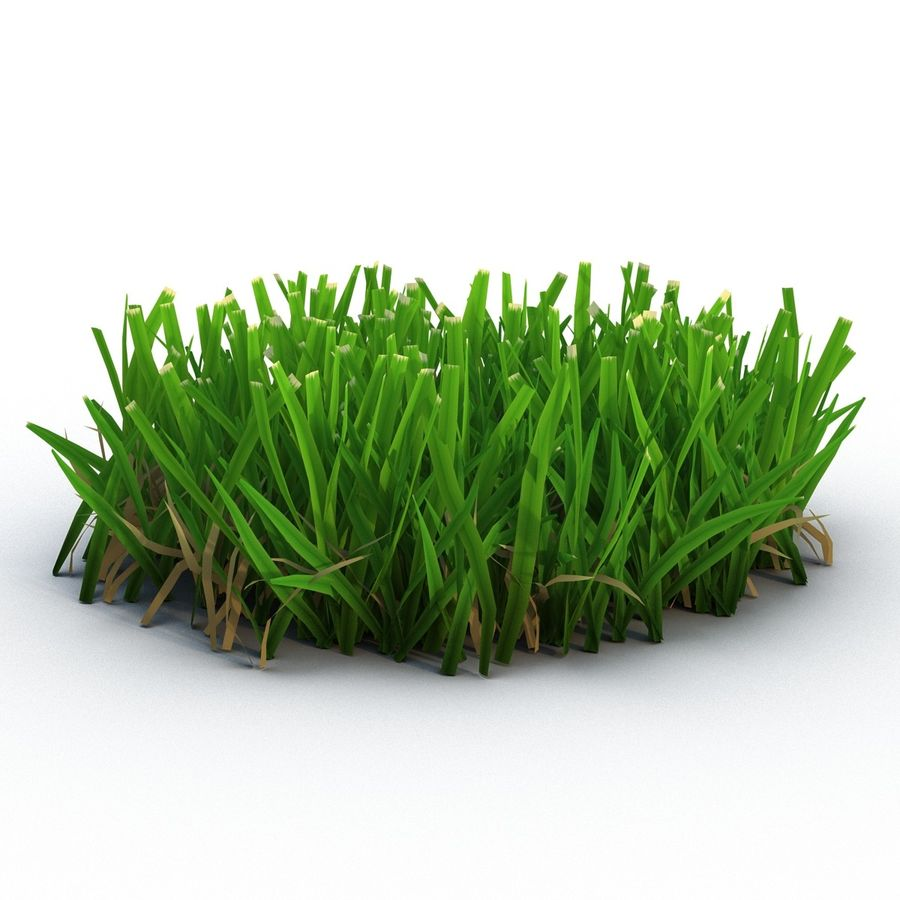 Grass 5 royalty-free 3d model - Preview no. 3