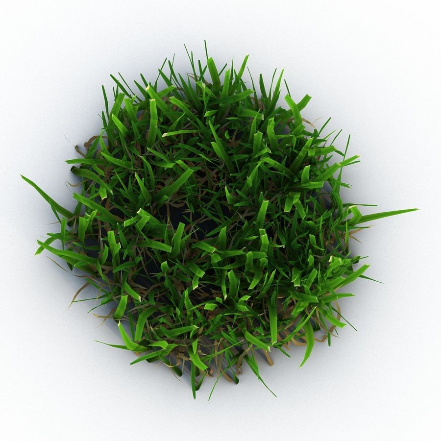 Grass 5 royalty-free 3d model - Preview no. 4