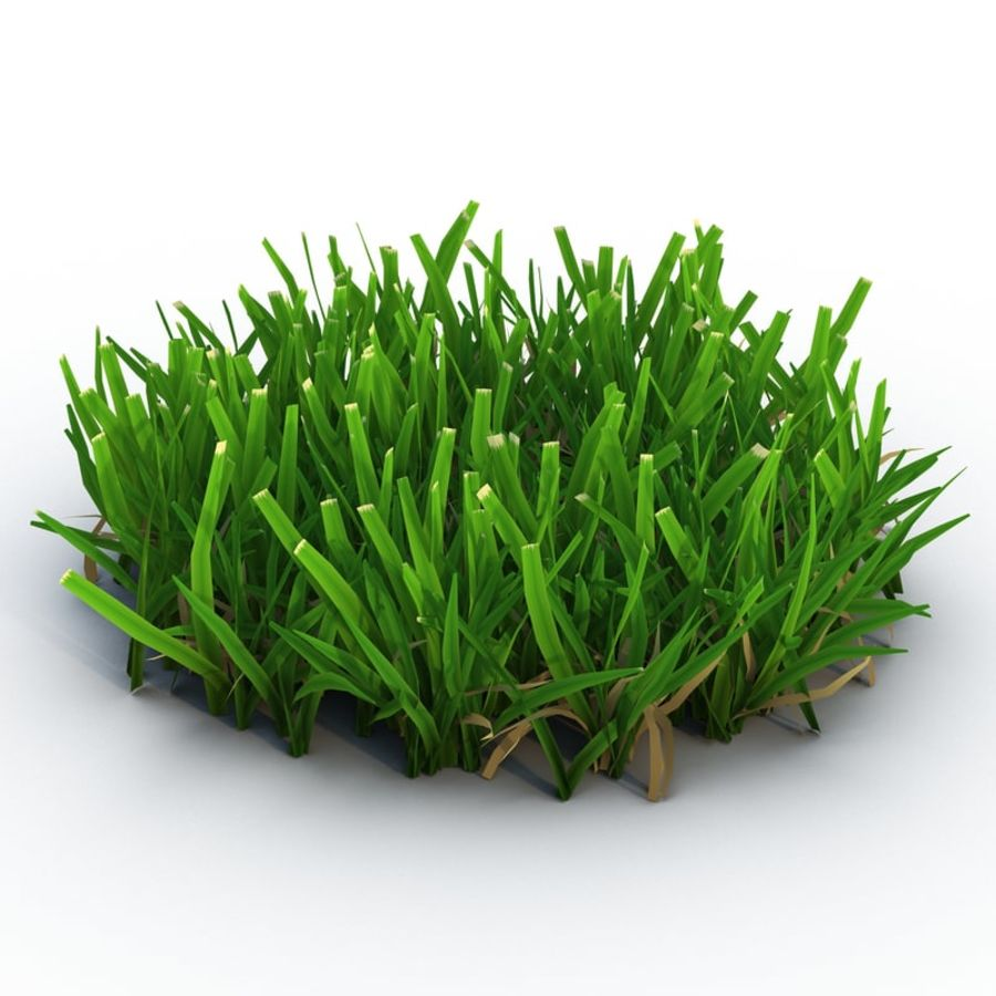 Grass 5 royalty-free 3d model - Preview no. 2