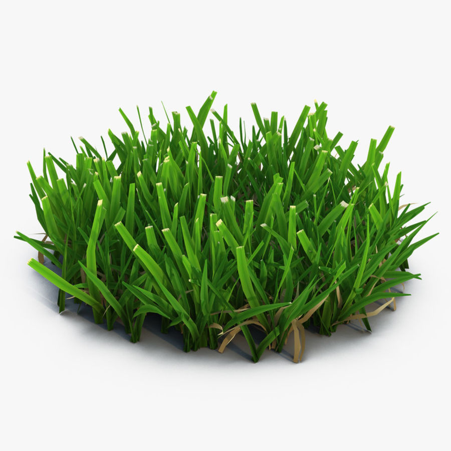 Gras 5 royalty-free 3d model - Preview no. 1
