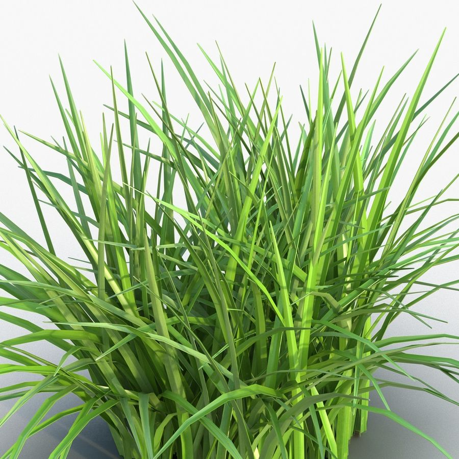 Grass royalty-free 3d model - Preview no. 9