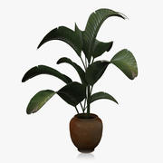 Large Houseplant 3d model