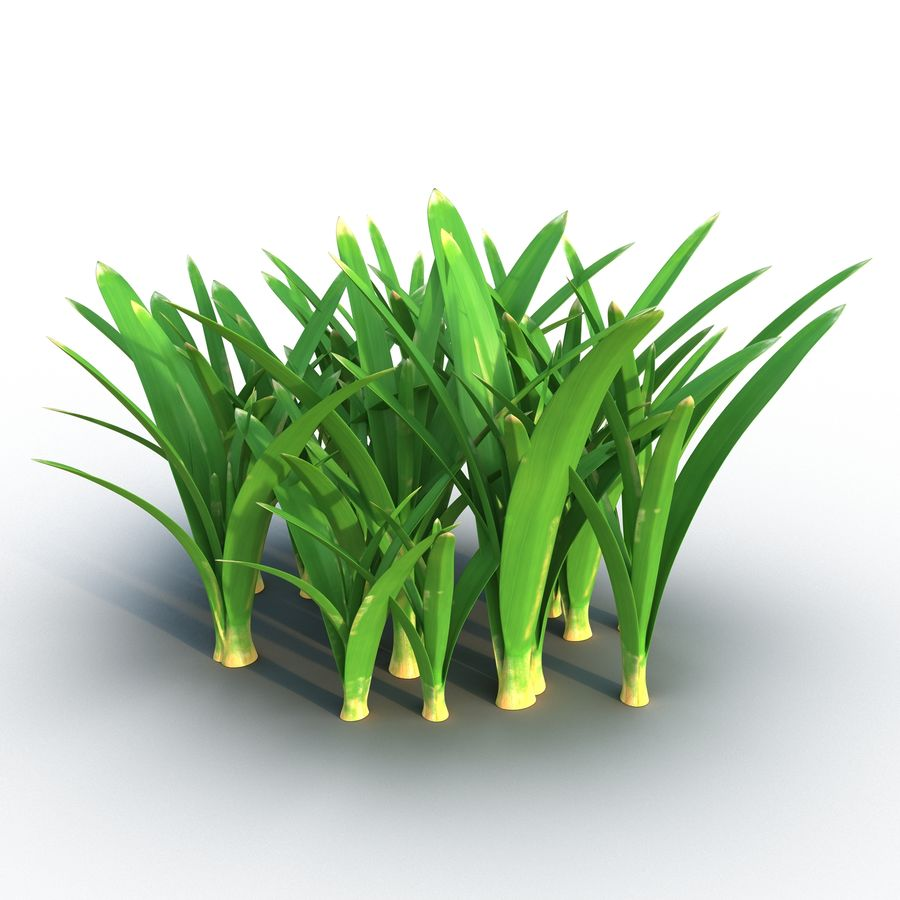 Grass 3 royalty-free 3d model - Preview no. 2