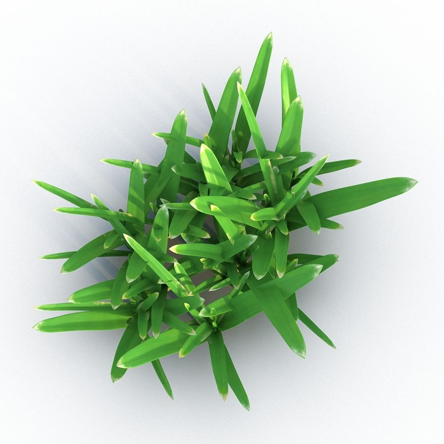 Grass 3 royalty-free 3d model - Preview no. 5