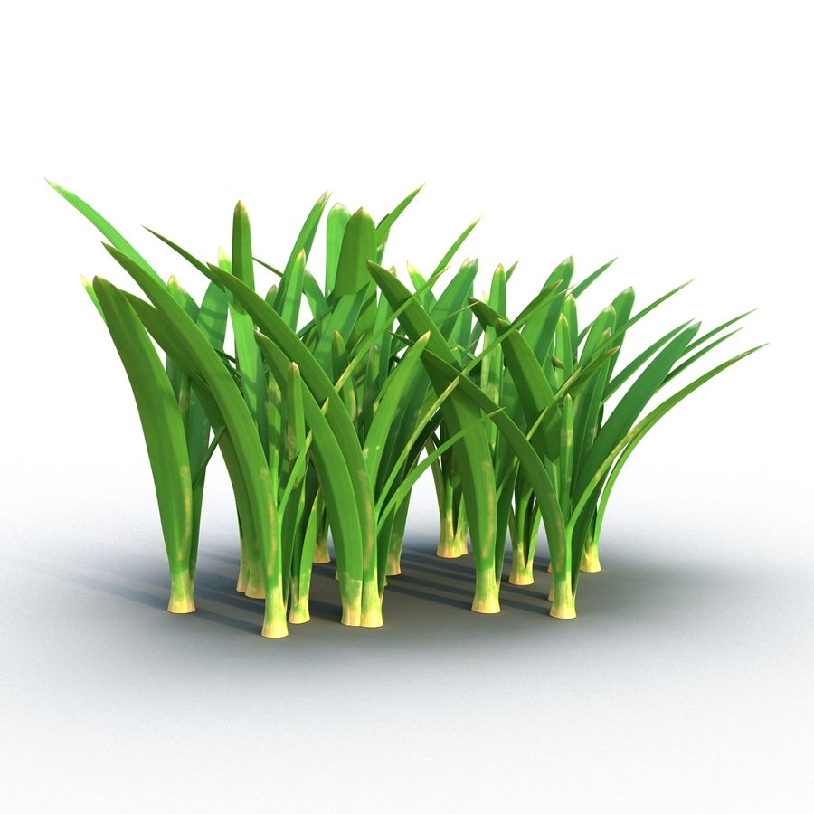 Grass 3 royalty-free 3d model - Preview no. 4