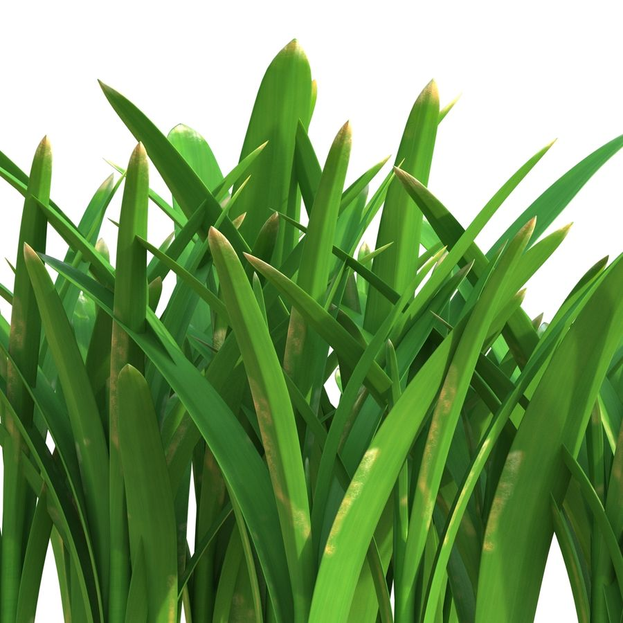 Grass 3 royalty-free 3d model - Preview no. 9