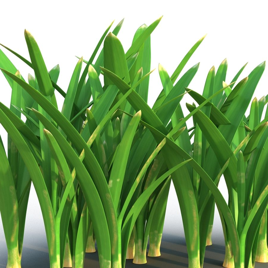 Grass 3 royalty-free 3d model - Preview no. 7