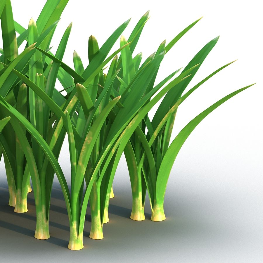 Grass 3 royalty-free 3d model - Preview no. 8